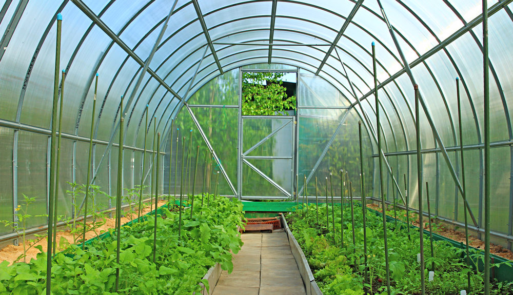 Characteristics To Keep In Mind When You Grow Plants In A Grow Tent