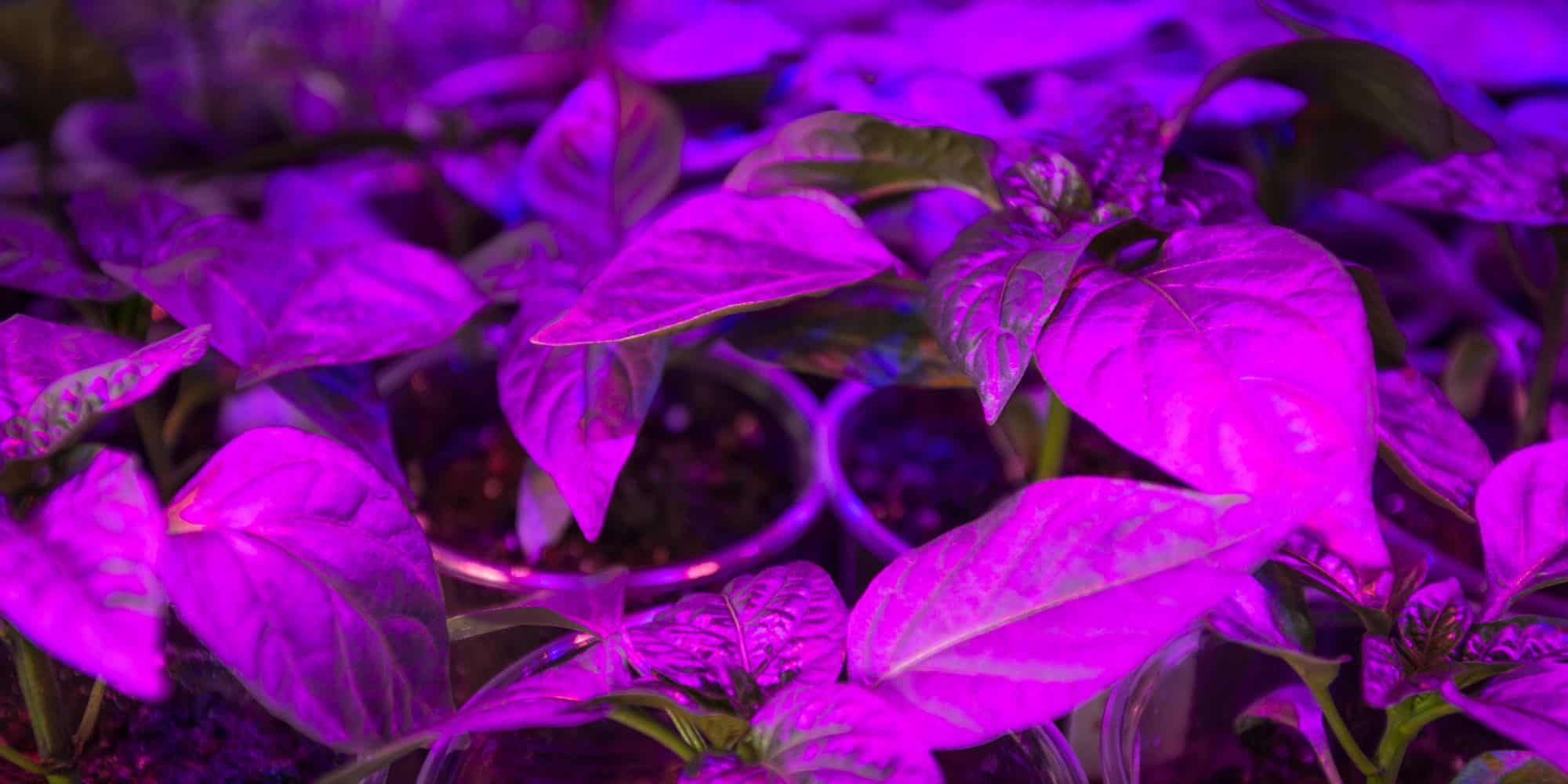 Final Tips To Think About Before Buying A LED Grow Light