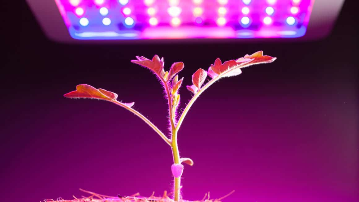 5 Best LED Grow Lights In Canada 2020 – Review & Guide