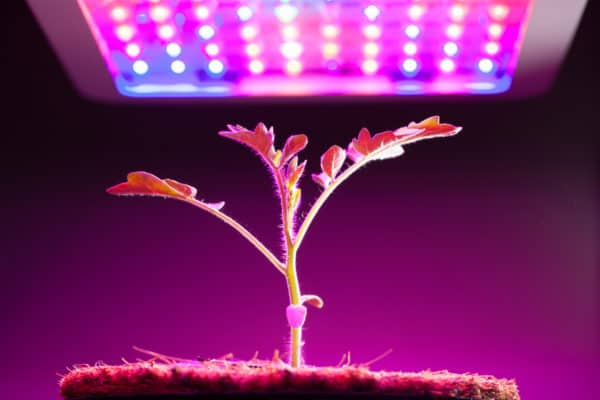 7 Best LED Grow Lights In Canada 2020 – Review & Guide