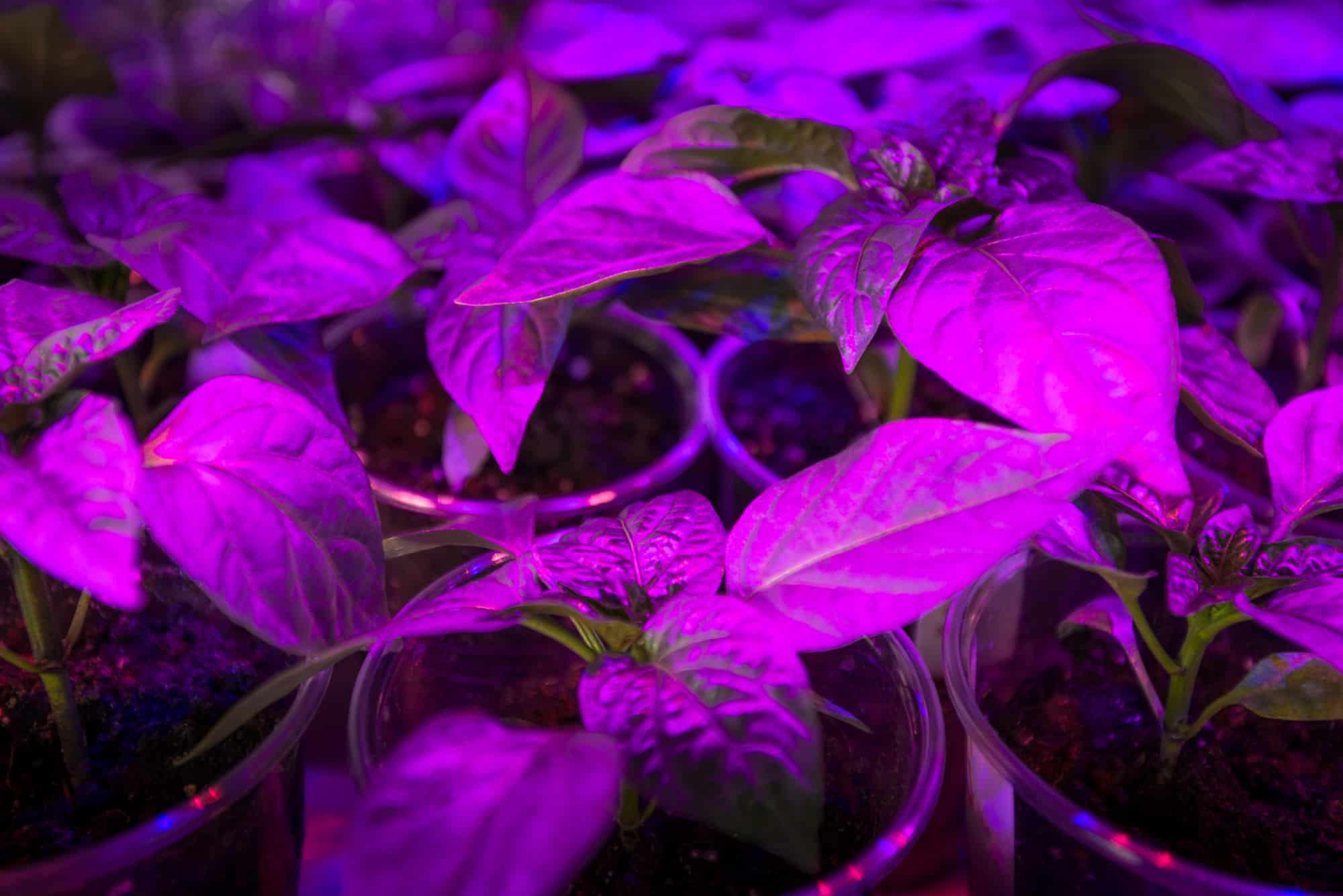 What Should You Look For In A Grow Light?